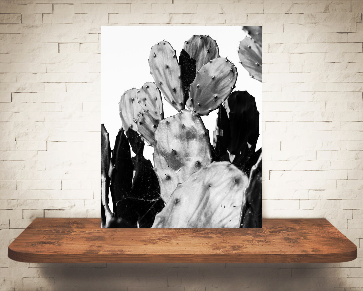 Prickly Pear Cactus Photograph Black White