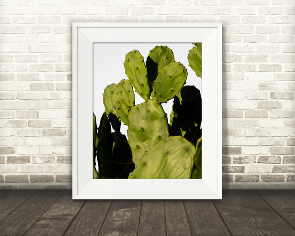 Prickly Pear Cactus Photograph
