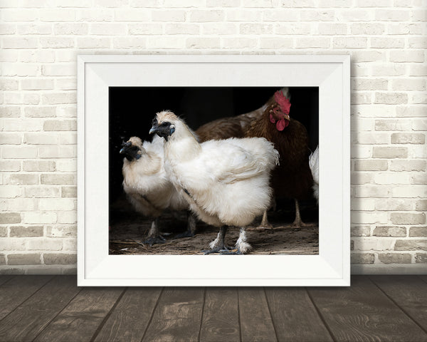 Chicken Photograph