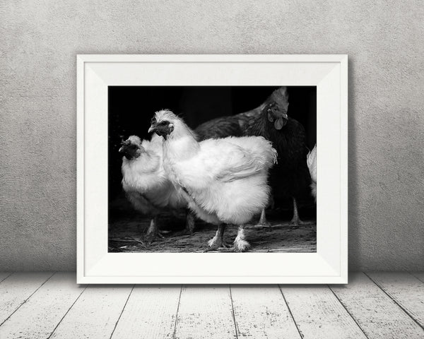 Chicken Photograph Black White