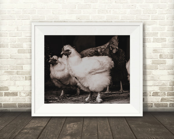 Chicken Photograph Sepia