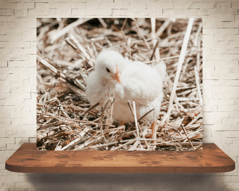 Chick Photograph