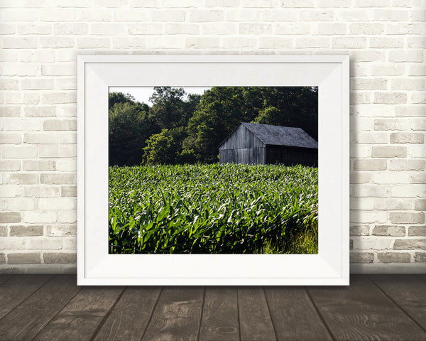 Barn Cornfield Photograph