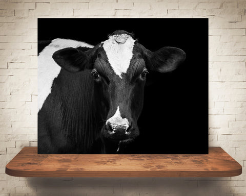 Holstein Cow Photograph Black White