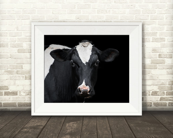 Holstein Cow Photograph