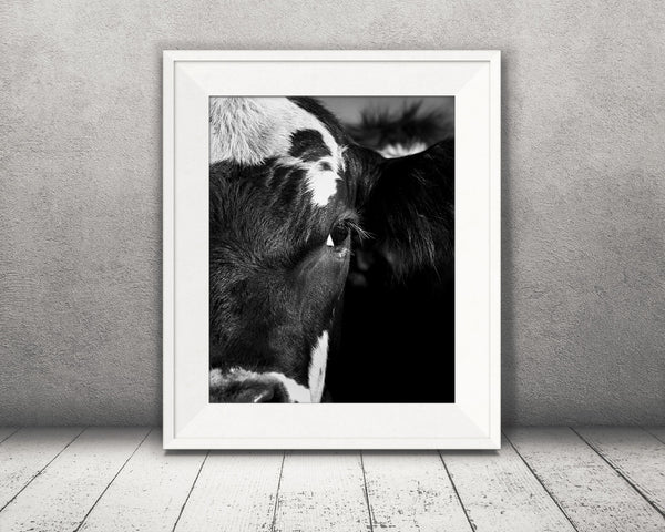 Cow Photograph Black White