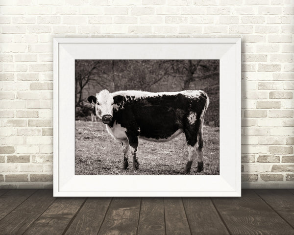 Cow Photograph Sepia