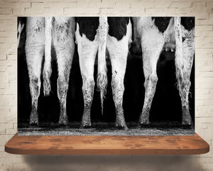 Cow Tails Photograph Black White