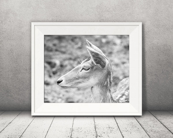 Deer Photograph Black White