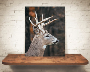 Deer Buck Photograph