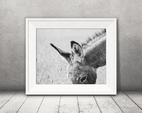 Donkey Ears Photograph Black White
