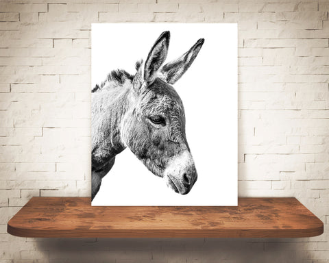 Donkey Photograph Black White
