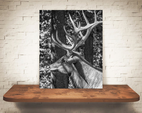 Elk Photograph Black White