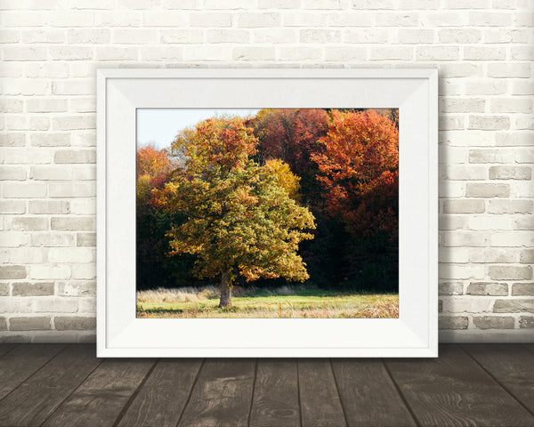 Fall Tree Photograph