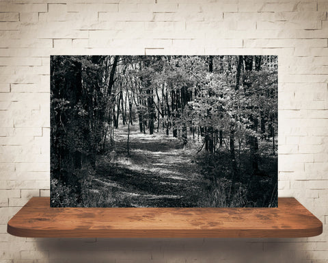 Fall Woods Photograph Black White