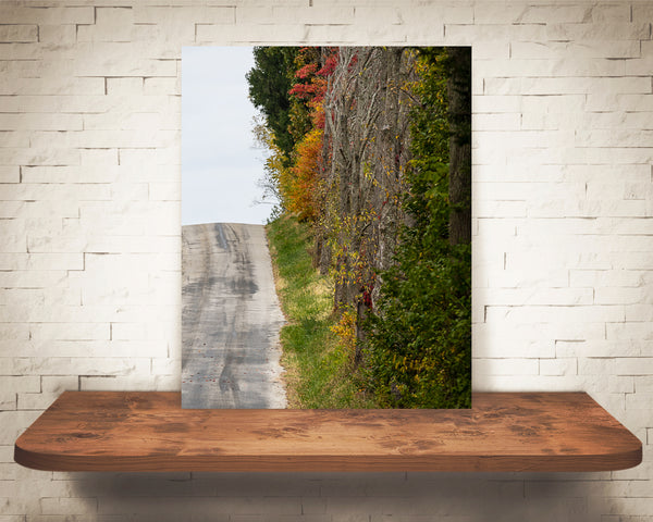 Country Road Fall Photograph