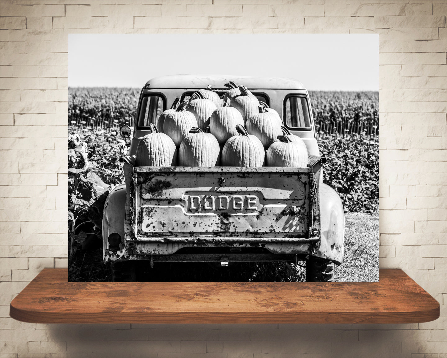 Truck Pumpkins Photograph Black White