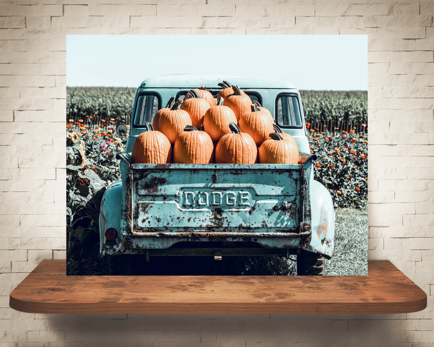 Blue Truck Pumpkins Photograph