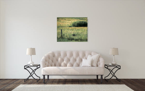 Farm Field Photograph