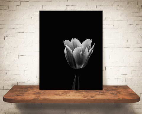 Tulip Flower Photograph Black White