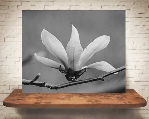 Magnolia Photograph Black White