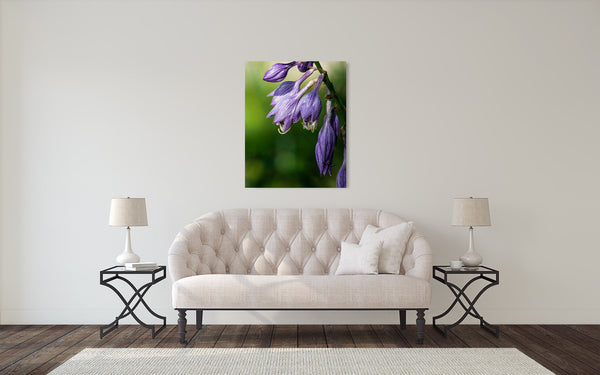 Purple Bellflower Flower Photograph