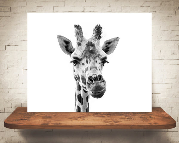 Giraffe Photograph Black White