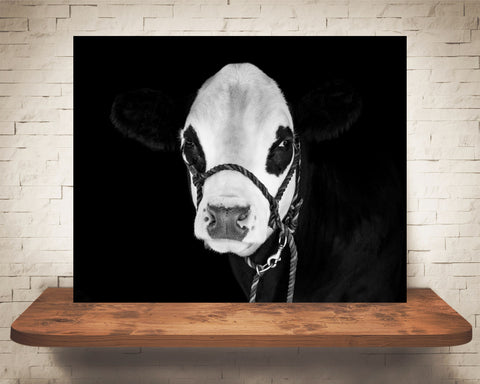 Hereford Cow Photograph Black White