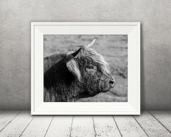 Scottish Highland Cow Photograph Black White