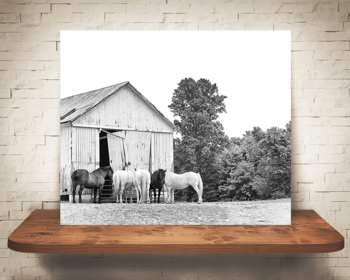 Horse Barn Photograph Black White