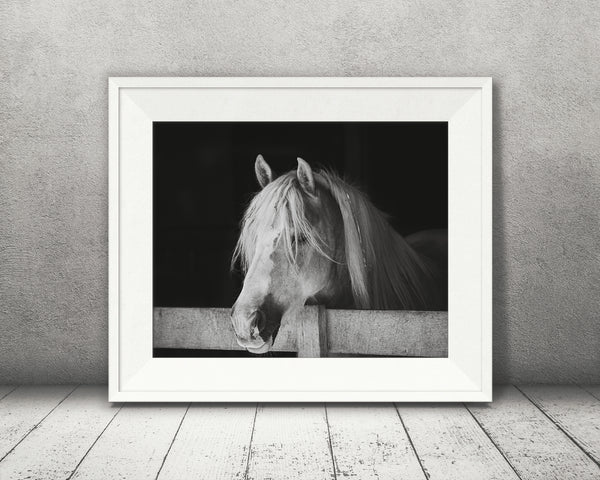 Horse Photograph Black White