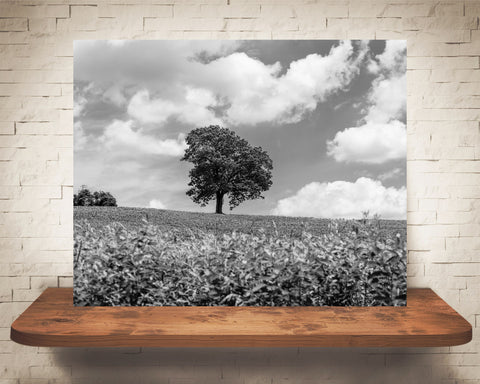 Tree Country Landscape Photograph Black White