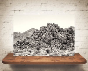 Joshua Tree Photograph Black Sepia
