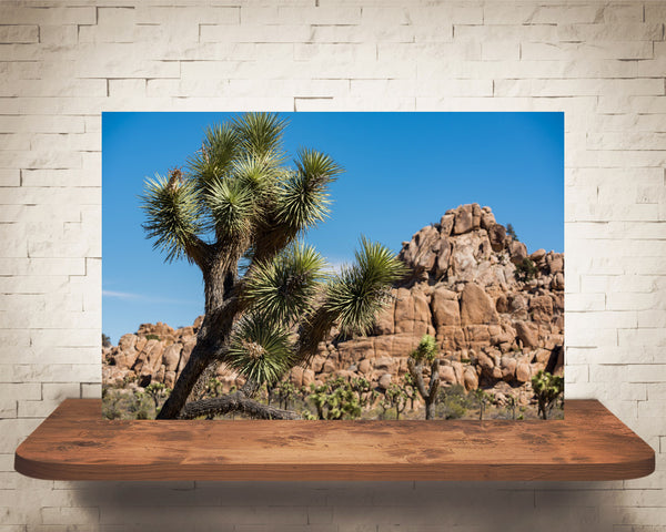 Joshua Tree Photograph
