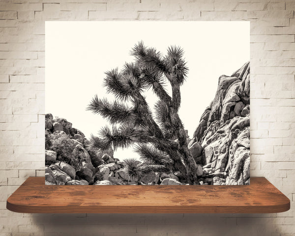 Joshua Tree Photograph Sepia