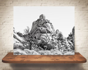 Joshua Tree Photograph Black White