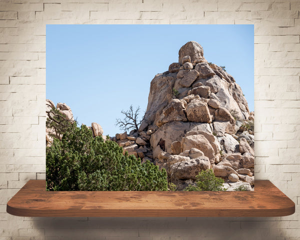 Joshua Tree Park Photograph