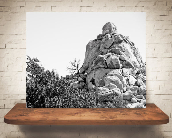Joshua Tree Park Photograph Black White