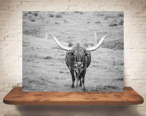 Longhorn Cow Photograph Black White