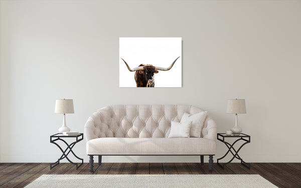 Longhorn Cow Photograph