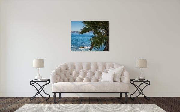 Palm Tree Oceanview Photograph