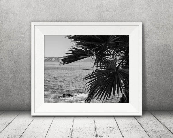 Palm Tree Oceanview Photograph Black White