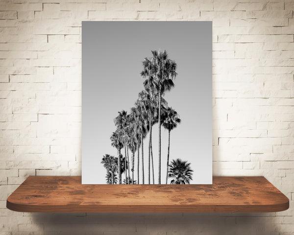 Palm Tree Photograph Black White