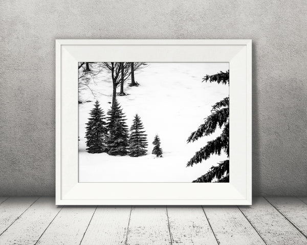Pine Tree Photograph Black White
