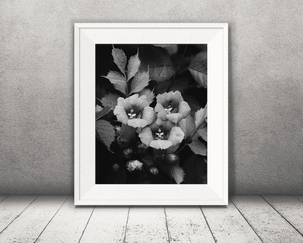 Flower Photograph Black White