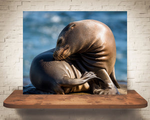 Sea Lion Photograph