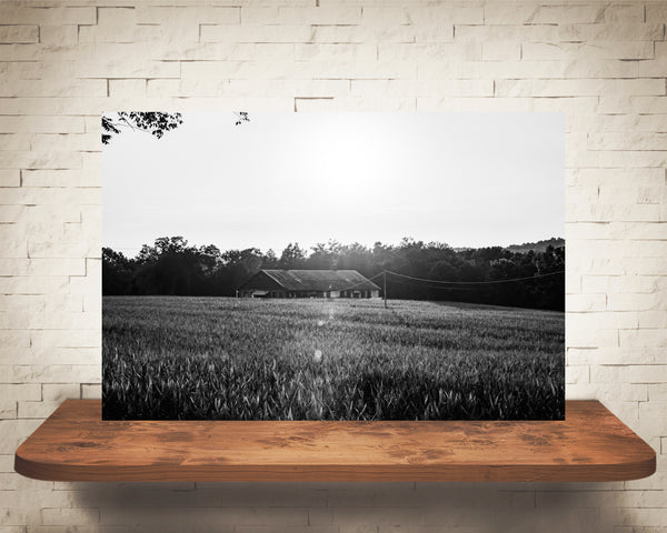 Cornfield Sunset Photograph Black White