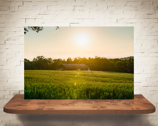 Cornfield Sunset Photograph