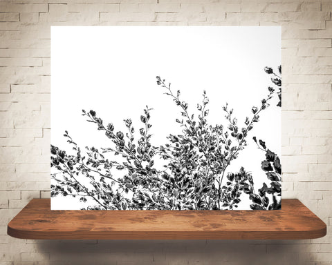 Beech Tree Leaves Photograph Black White