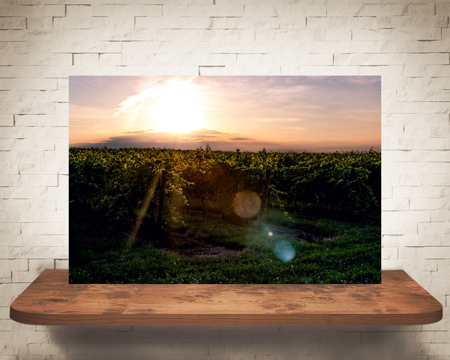 Vineyard Sunset Photograph